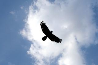 high-fly-1311680 (Kopiowanie)