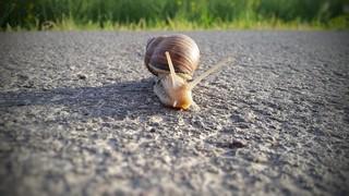 snail-795296_1920 (Kopiowanie)